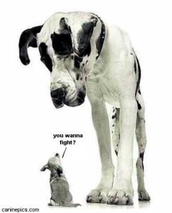funny-big-dog